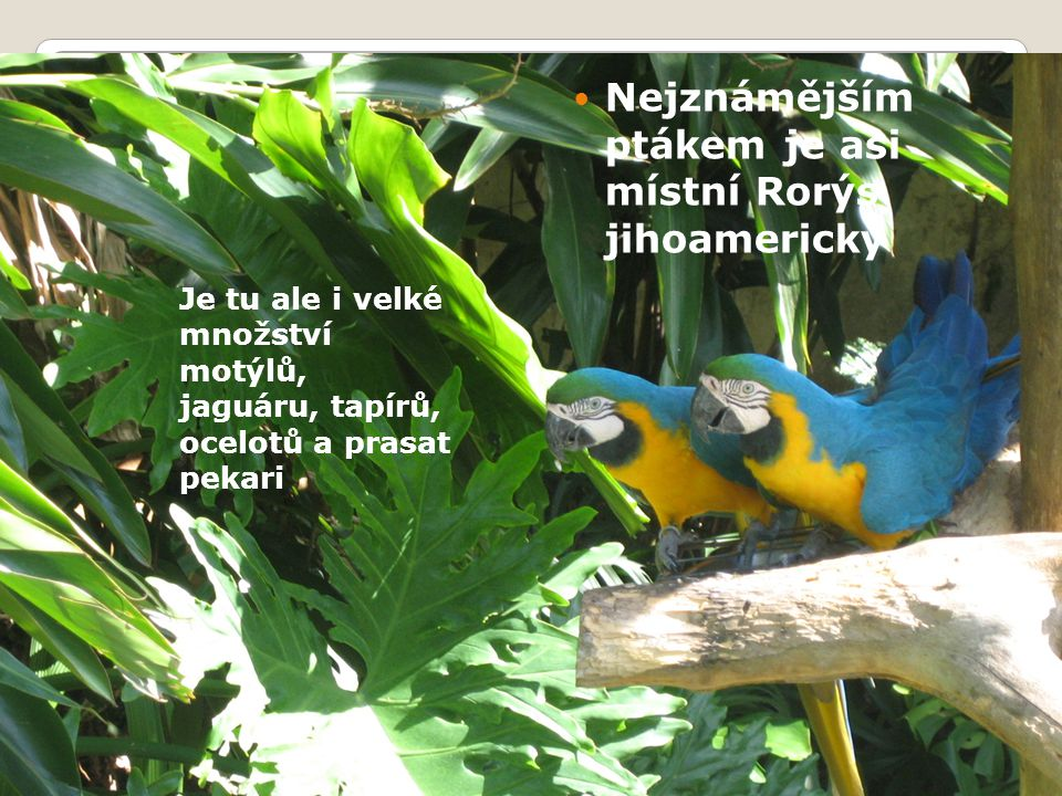 Nejznámějším ptákem je asi místní Rorýs jihoamerický Je tu ale i velké množství motýlů, jaguáru, tapírů, ocelotů a prasat pekari