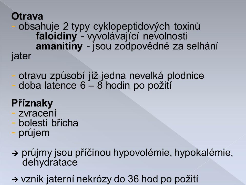 Otrava - obsahuje 2 typy cyklopeptidových toxinů faloidiny - vyvolávající nevolnosti amanitiny - jsou zodpovědné za selhání jater - otravu způsobí již jedna nevelká plodnice - doba latence 6 – 8 hodin po požití Příznaky - zvracení - bolesti břicha - průjem  průjmy jsou příčinou hypovolémie, hypokalémie, dehydratace  vznik jaterní nekrózy do 36 hod po požití