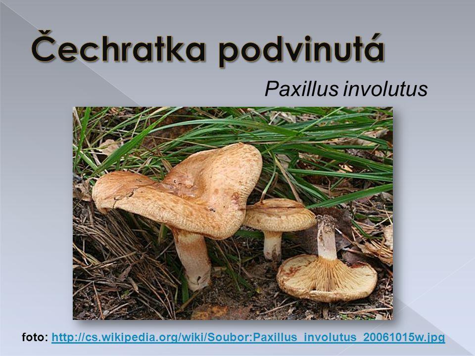 Paxillus involutus foto: http://cs.wikipedia.org/wiki/Soubor:Paxillus_involutus_20061015w.jpghttp://cs.wikipedia.org/wiki/Soubor:Paxillus_involutus_20061015w.jpg