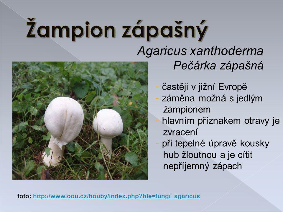 Agaricus xanthoderma Pečárka zápašná - častěji v jižní Evropě - záměna možná s jedlým žampionem - hlavním příznakem otravy je zvracení - při tepelné úpravě kousky hub žloutnou a je cítit nepříjemný zápach foto: http://www.oou.cz/houby/index.php?file=fungi_agaricushttp://www.oou.cz/houby/index.php?file=fungi_agaricus