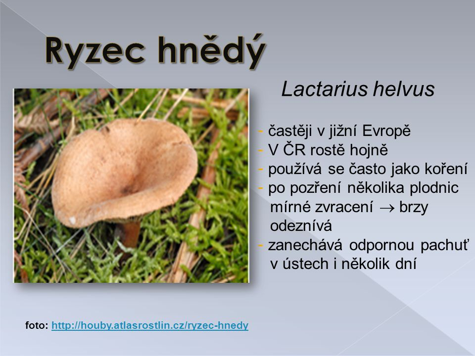 Lactarius helvus - častěji v jižní Evropě - V ČR rostě hojně - používá se často jako koření - po pozření několika plodnic mírné zvracení  brzy odeznívá - zanechává odpornou pachuť v ústech i několik dní foto: http://houby.atlasrostlin.cz/ryzec-hnedyhttp://houby.atlasrostlin.cz/ryzec-hnedy