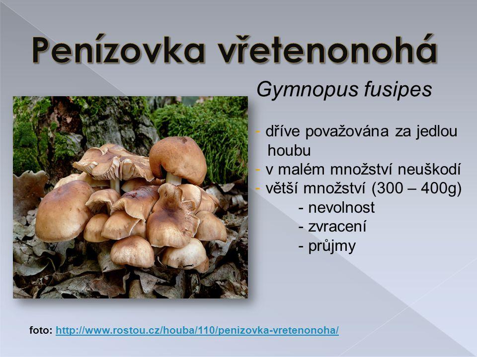 Gymnopus fusipes - dříve považována za jedlou houbu - v malém množství neuškodí - větší množství (300 – 400g) - nevolnost - zvracení - průjmy foto: http://www.rostou.cz/houba/110/penizovka-vretenonoha/http://www.rostou.cz/houba/110/penizovka-vretenonoha/