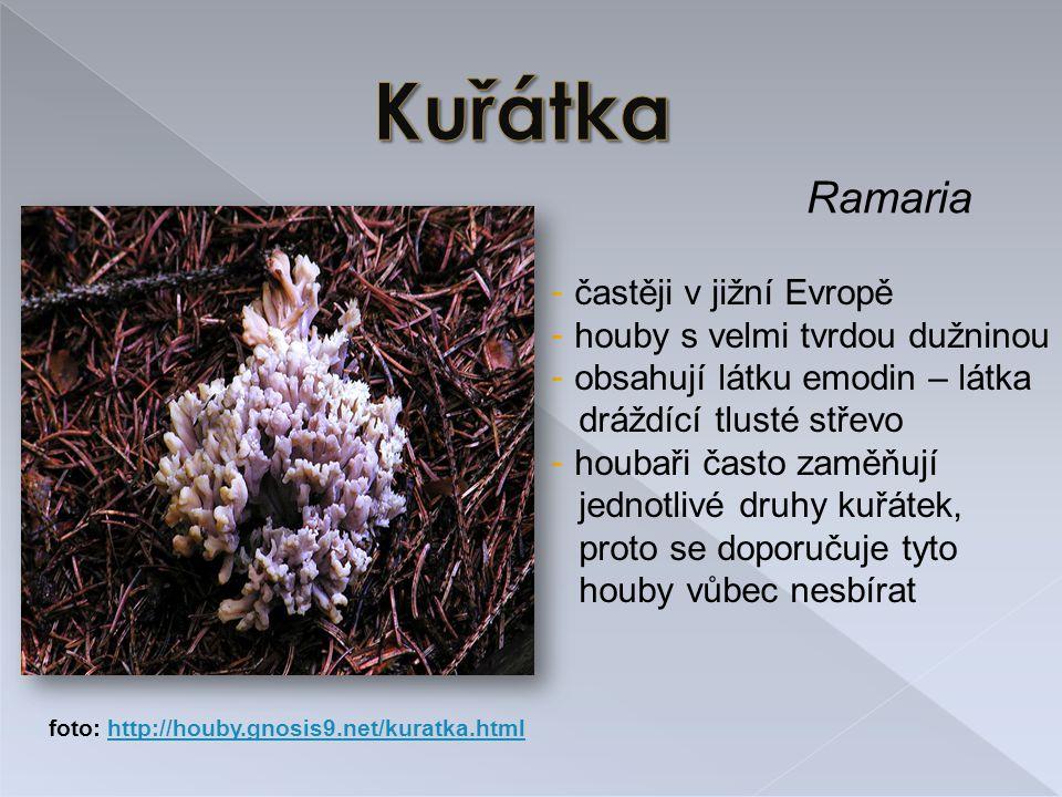 Ramaria - častěji v jižní Evropě - houby s velmi tvrdou dužninou - obsahují látku emodin – látka dráždící tlusté střevo - houbaři často zaměňují jednotlivé druhy kuřátek, proto se doporučuje tyto houby vůbec nesbírat foto: http://houby.gnosis9.net/kuratka.htmlhttp://houby.gnosis9.net/kuratka.html