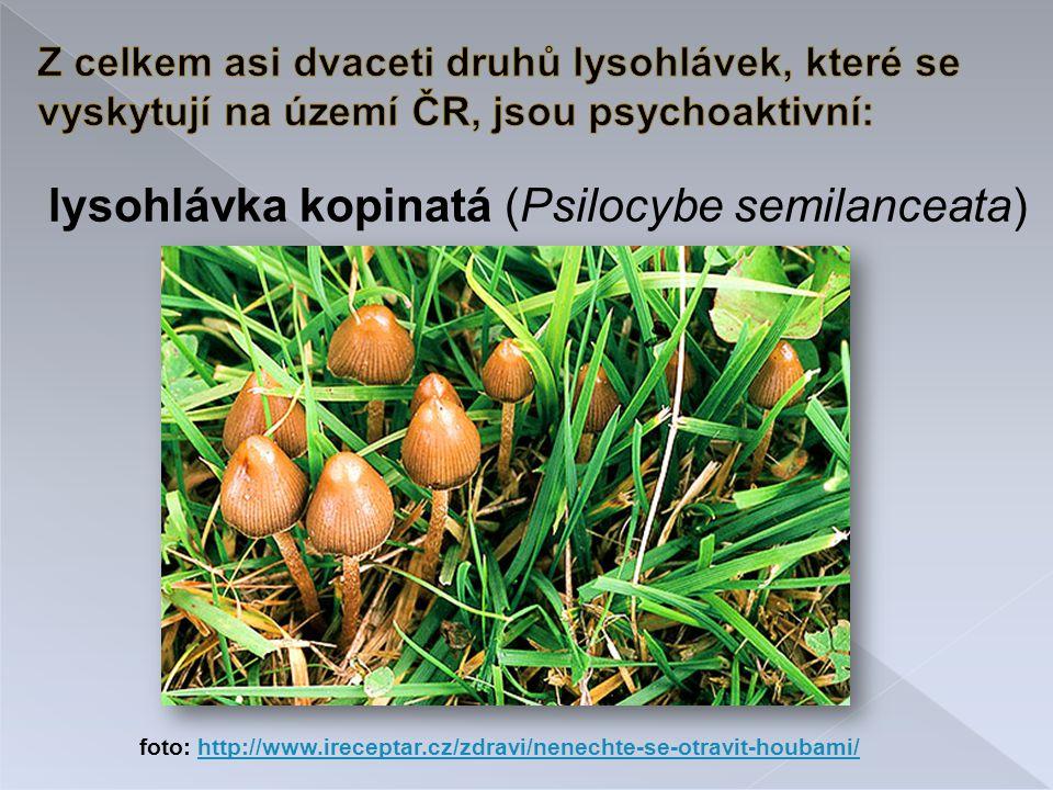 lysohlávka kopinatá (Psilocybe semilanceata) foto: http://www.ireceptar.cz/zdravi/nenechte-se-otravit-houbami/http://www.ireceptar.cz/zdravi/nenechte-se-otravit-houbami/
