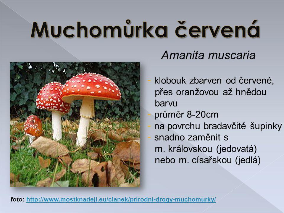 Amanita muscaria - klobouk zbarven od červené, přes oranžovou až hnědou barvu - průměr 8-20cm - na povrchu bradavčité šupinky - snadno zaměnit s m.