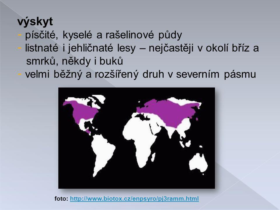 výskyt - písčité, kyselé a rašelinové půdy - listnaté i jehličnaté lesy – nejčastěji v okolí bříz a smrků, někdy i buků - velmi běžný a rozšířený druh v severním pásmu foto: http://www.biotox.cz/enpsyro/pj3ramm.htmlhttp://www.biotox.cz/enpsyro/pj3ramm.html