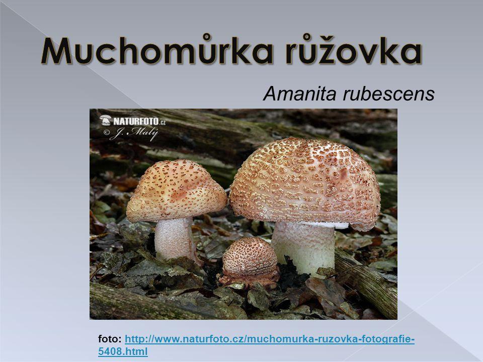 Amanita rubescens foto: http://www.naturfoto.cz/muchomurka-ruzovka-fotografie- 5408.htmlhttp://www.naturfoto.cz/muchomurka-ruzovka-fotografie- 5408.html /