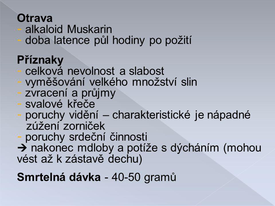 - lysohlávky se používají v řadě náboženských, věšteckých či léčebných rituálů - jsou zneužívány především v Evropě a Americe, a zde se i nejvíce vyskytují foto: http://www.biotox.cz/enpsyro/pj3rpsi.htmlhttp://www.biotox.cz/enpsyro/pj3rpsi.html