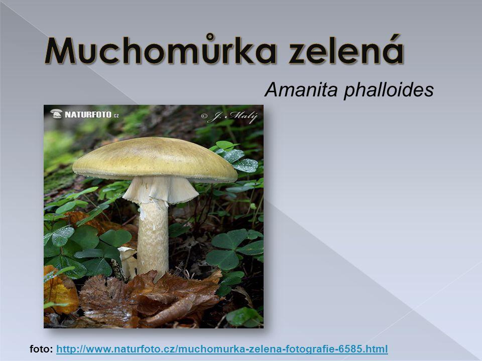 Amanita phalloides foto: http://www.naturfoto.cz/muchomurka-zelena-fotografie-6585.htmlhttp://www.naturfoto.cz/muchomurka-zelena-fotografie-6585.html