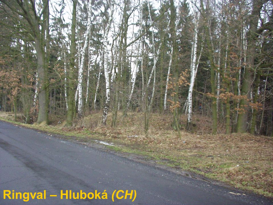 Ringval – Hluboká (CH)