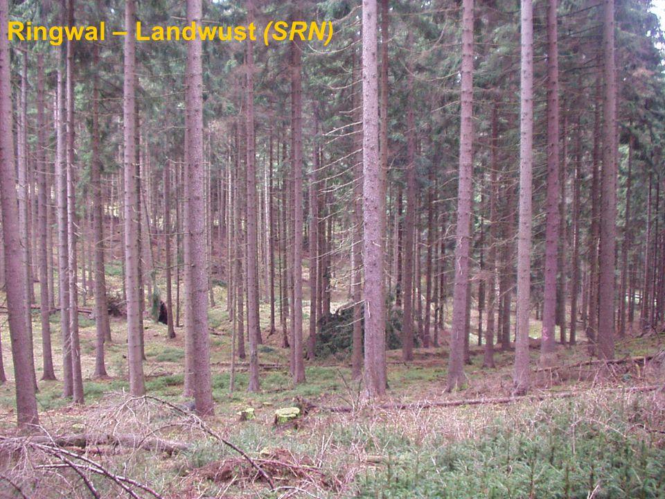 Ringwal – Landwust (SRN)