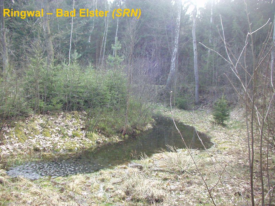 Ringwal – Bad Elster (SRN)