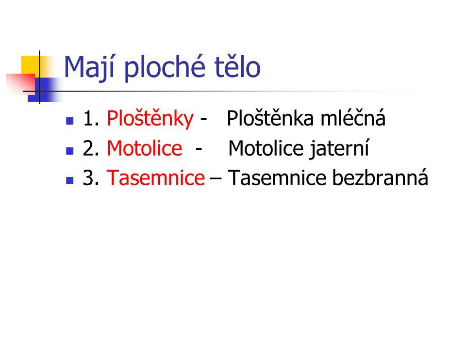 ŘEMENATKA PTAČÍ - Tasemnice střídající v životním cyklu ptáky a ryby Obr.9