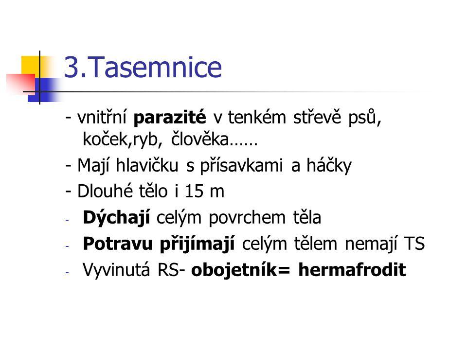 3.Tasemnice - vnitřní parazité v tenkém střevě psů, koček,ryb, člověka…… - Mají hlavičku s přísavkami a háčky - Dlouhé tělo i 15 m - Dýchají celým pov