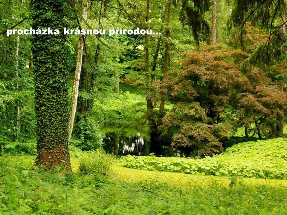 procházka krásnou přírodou...