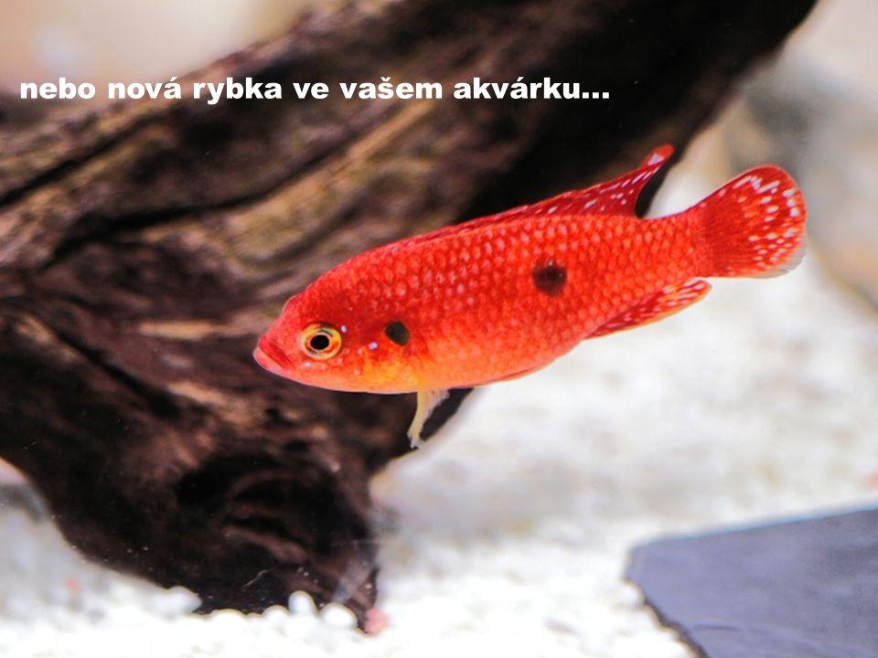 nebo nová rybka ve vašem akvárku...