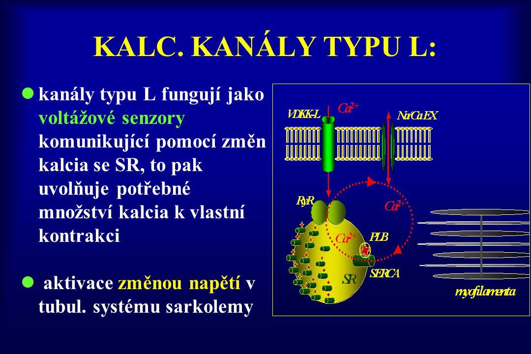KALC. KANÁLY TYPU L: lkanály typu L fungují jako voltážové senzory komunikující pomocí změn kalcia se SR, to pak uvolňuje potřebné množství kalcia k v