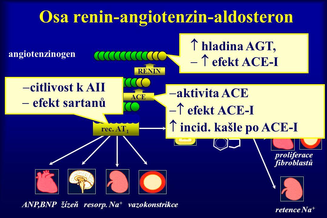 Osa renin-angiotenzin-aldosteron angiotenzinogen angiotenzin I angiotenzin II aldosteron ANP,BNP žízeň resorp. Na + vazokonstrikce RENIN rec. AT 1 ACE