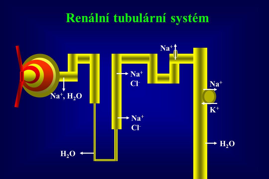 Na +, H 2 O H2OH2O Na + Cl - H2OH2O Na + K+K+ Cl - Renální tubulární systém sodíkový kanál retence sodíku a vody,  efekt amiloridu regul protein G  reabsorpce Na +  odpověď na thiazidy  -adducin  reabsorpce Na +  odpověď na thiazidy