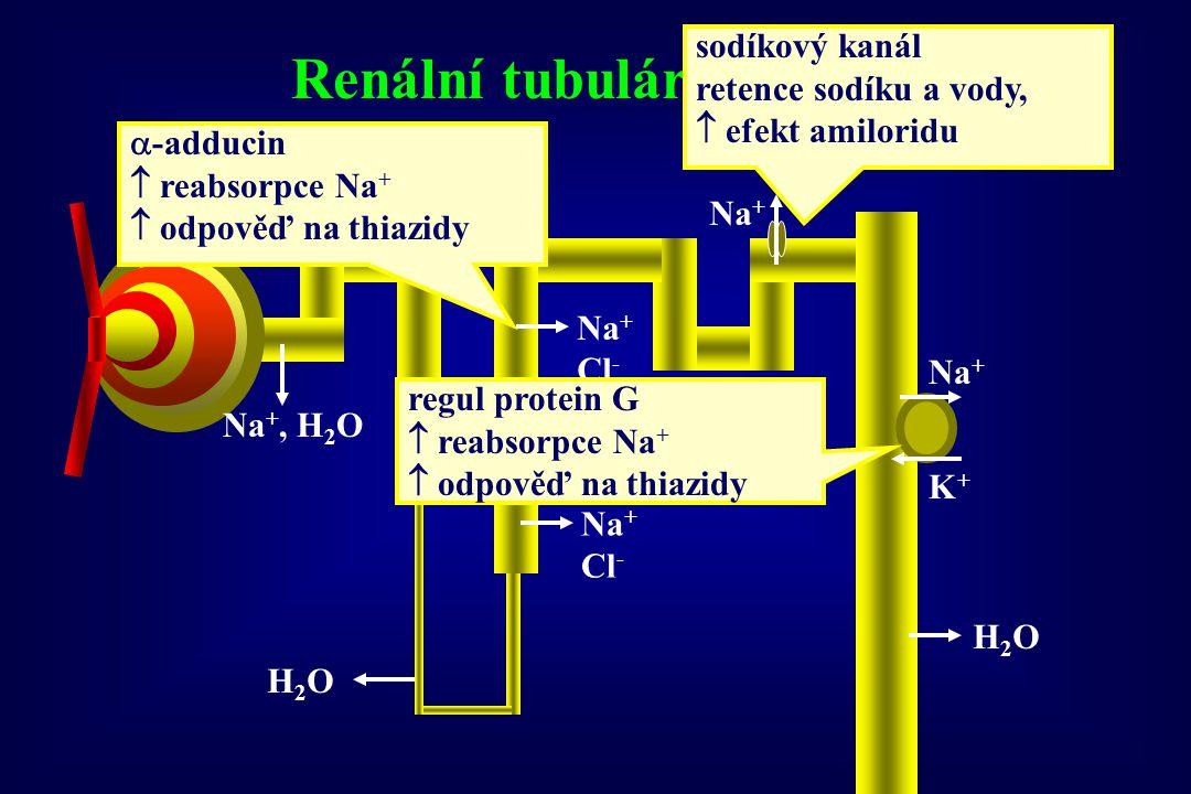 DILTIAZEM, VERAPAMIL - farmakokinetika absorpce z GIT 90% (nezávisle na jídle) biol.