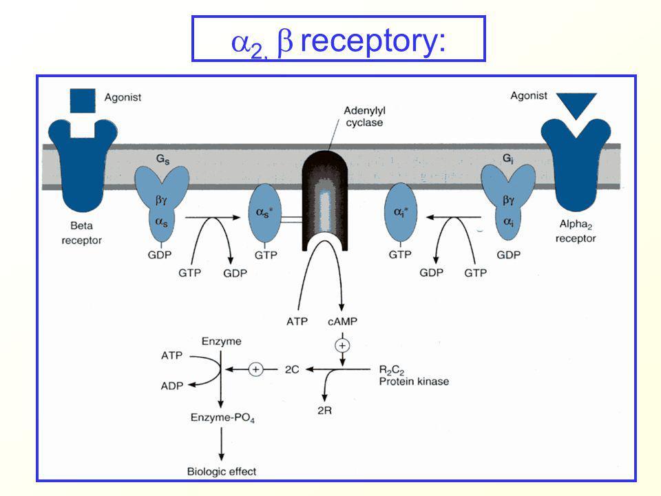  2,  receptory: