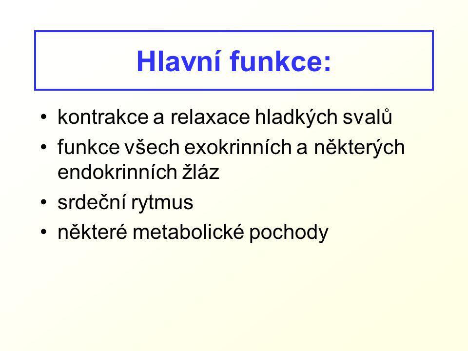 Hlavní funkce: kontrakce a relaxace hladkých svalů funkce všech exokrinních a některých endokrinních žláz srdeční rytmus některé metabolické pochody