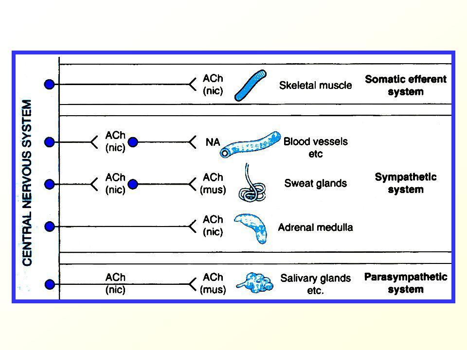 Současně i další sympatolytické účinky: hypersekrece HCl v žaludku průjmy pocit ucpaného nosu sklon k hypotenzi Indikace kromě využití neuroleptického účinku na ústupu často v kombinaci s námelovými alkaloidy (viz dále), adice účinků => snížení dávky reserpinu, oslabení NÚ