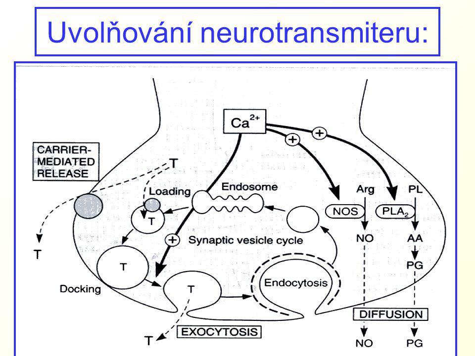 Biosytéza katecholaminů: Dopamin