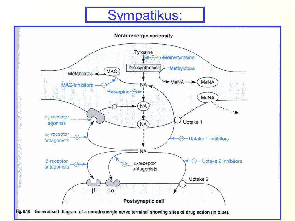  2 agonisté: Klonidin a  - metyldopa indikací je hypertenze (dochází k potlačení sympatické nervové aktivity z CNS zpětnovazebnou inhibicí při stimulaci  2 receptorů hypotensiva, léčba závislostí morfinového typu