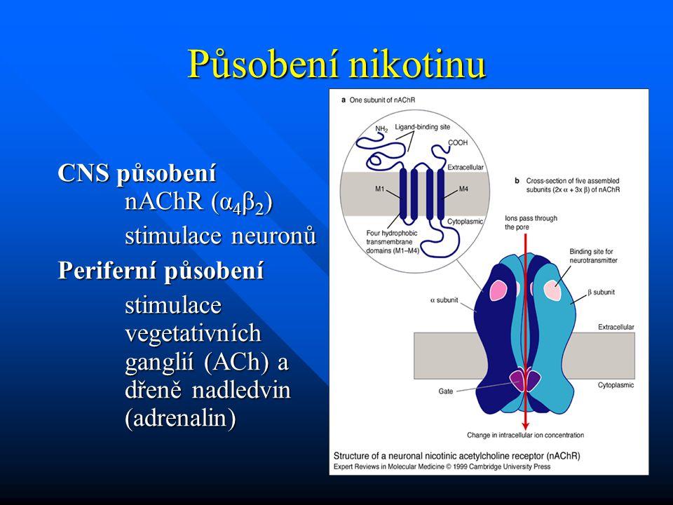 Působení nikotinu CNS působení nAChR (α 4 β 2 ) stimulace neuronů Periferní působení stimulace vegetativních ganglií (ACh) a dřeně nadledvin (adrenali
