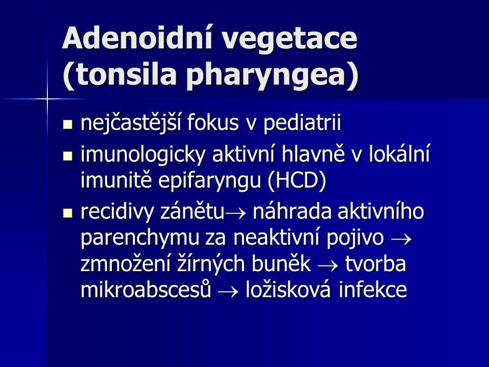 Adenoidní vegetace (tonsila pharyngea) nejčastější fokus v pediatrii nejčastější fokus v pediatrii imunologicky aktivní hlavně v lokální imunitě epifa