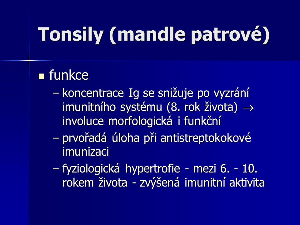 Tonsily (mandle patrové) funkce funkce –koncentrace Ig se snižuje po vyzrání imunitního systému (8. rok života)  involuce morfologická i funkční –prv