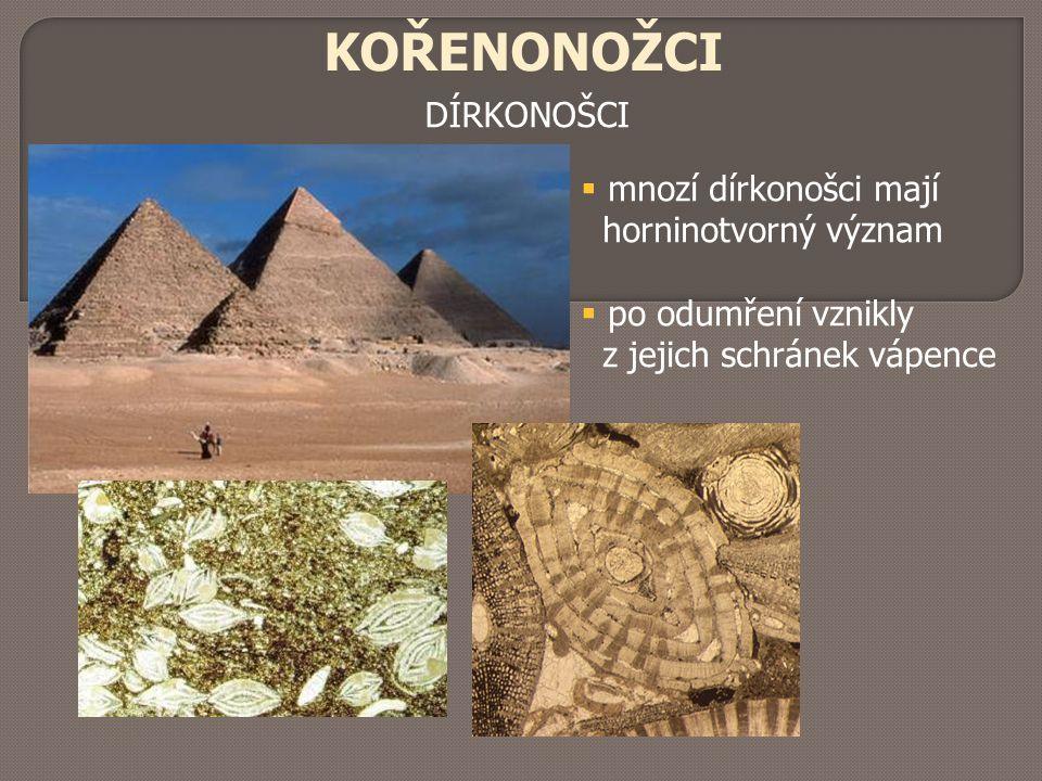 KOŘENONOŽCI DÍRKONOŠCI  mnozí dírkonošci mají horninotvorný význam  po odumření vznikly z jejich schránek vápence