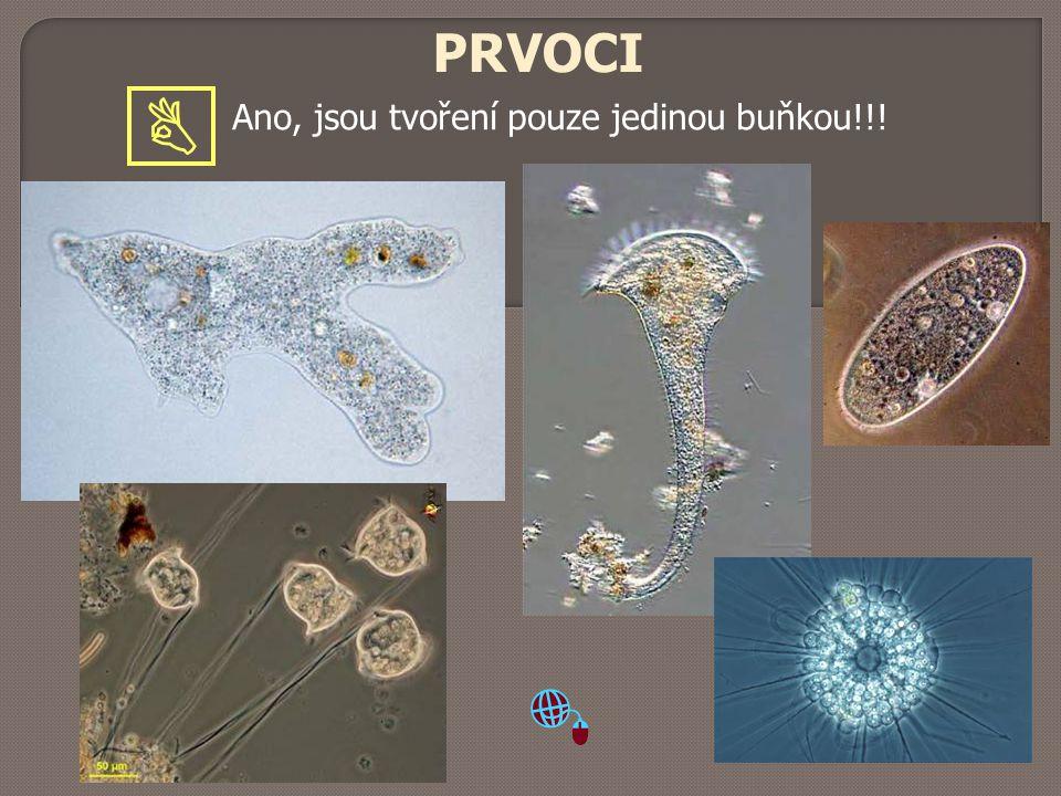 PRVOCI Ano, jsou tvoření pouze jedinou buňkou!!! 