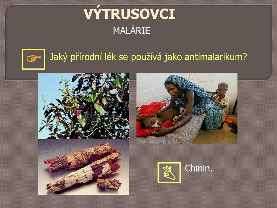 MALÁRIE VÝTRUSOVCI Jaký přírodní lék se používá jako antimalarikum?  Chinin. 