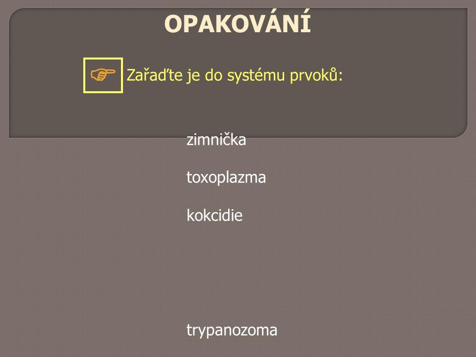 OPAKOVÁNÍ Zařaďte je do systému prvoků:  zimnička toxoplazma kokcidie trypanozoma