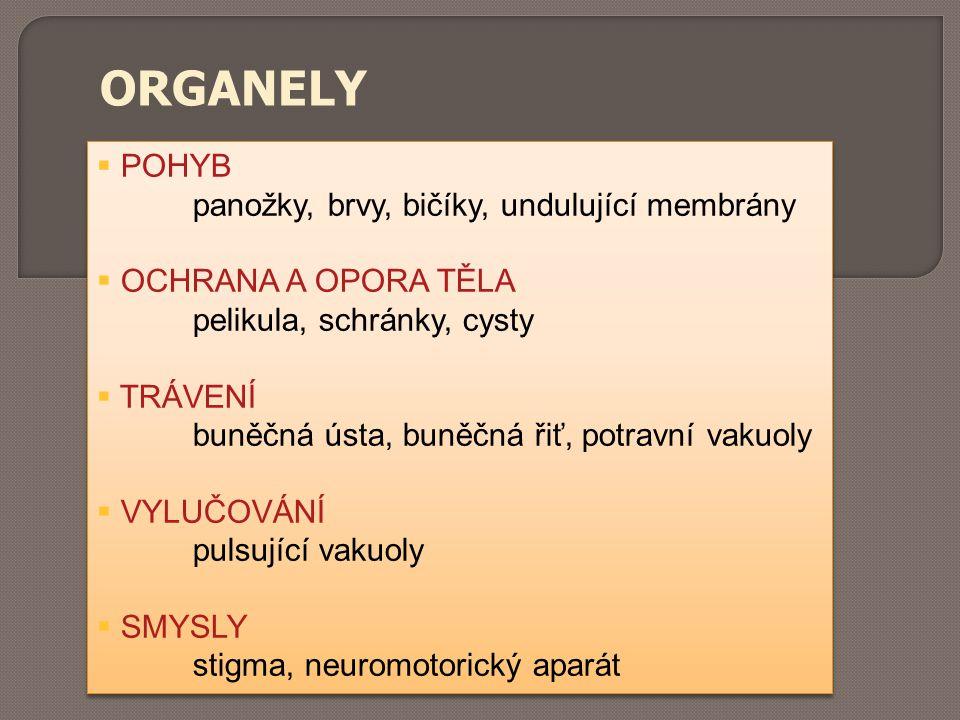 ORGANELY  POHYB panožky, brvy, bičíky, undulující membrány  OCHRANA A OPORA TĚLA pelikula, schránky, cysty  TRÁVENÍ buněčná ústa, buněčná řiť, potr