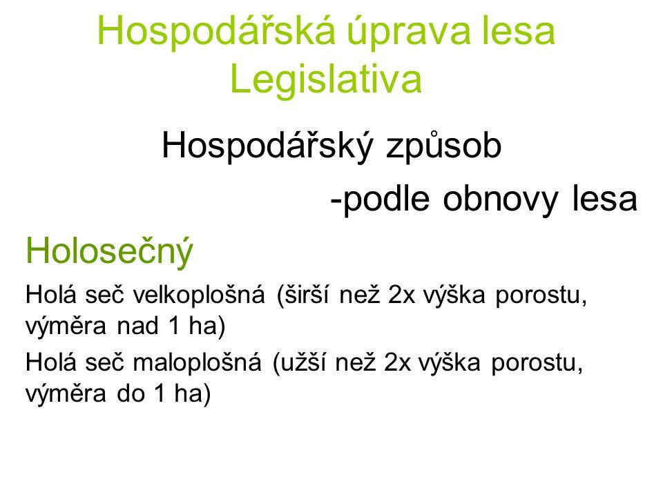 Hospodářská úprava lesa Legislativa Hospodářský způsob -podle obnovy lesa Holosečný Holá seč velkoplošná (širší než 2x výška porostu, výměra nad 1 ha)