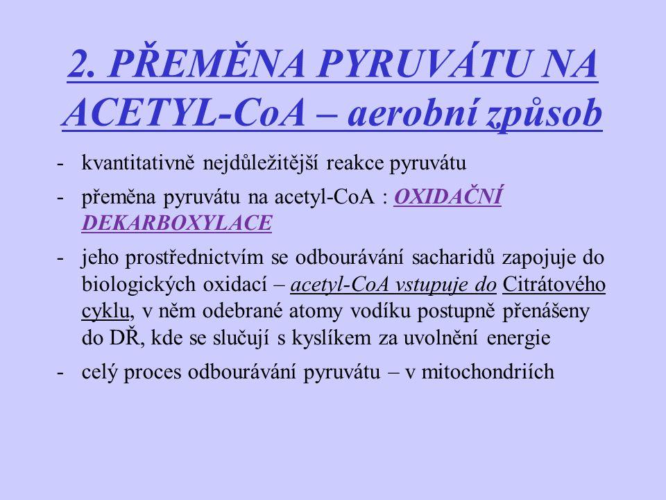 2. PŘEMĚNA PYRUVÁTU NA ACETYL-CoA – aerobní způsob -kvantitativně nejdůležitější reakce pyruvátu -přeměna pyruvátu na acetyl-CoA : OXIDAČNÍ DEKARBOXYL