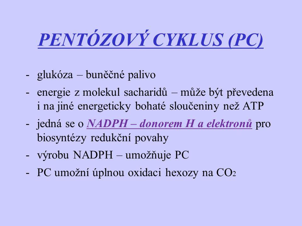 PENTÓZOVÝ CYKLUS (PC) -glukóza – buněčné palivo -energie z molekul sacharidů – může být převedena i na jiné energeticky bohaté sloučeniny než ATP -jed