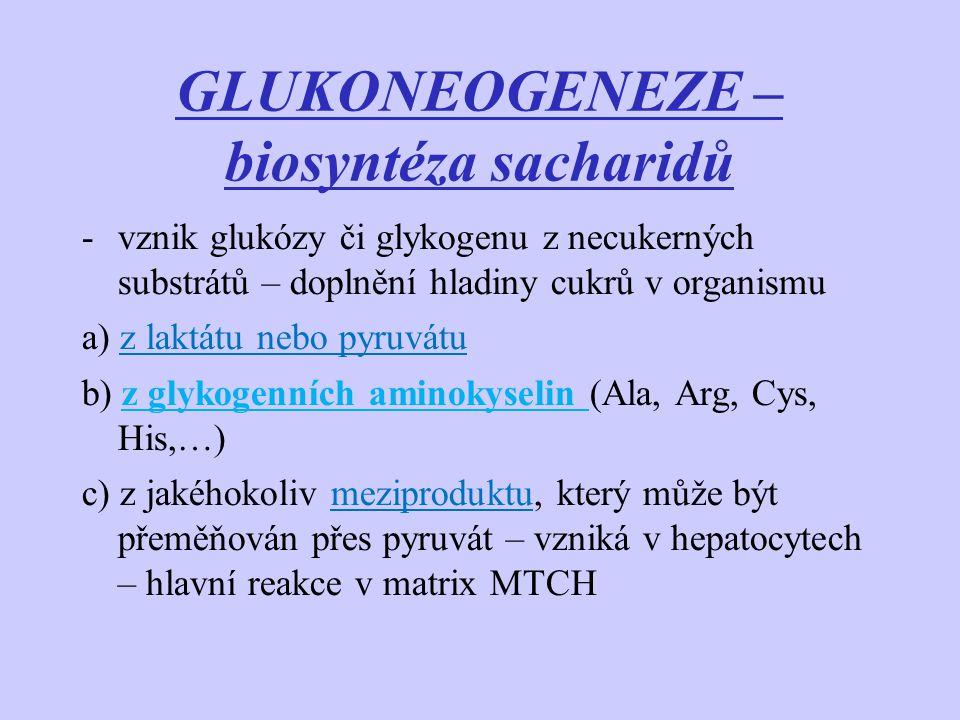 GLUKONEOGENEZE – biosyntéza sacharidů -vznik glukózy či glykogenu z necukerných substrátů – doplnění hladiny cukrů v organismu a) z laktátu nebo pyruv