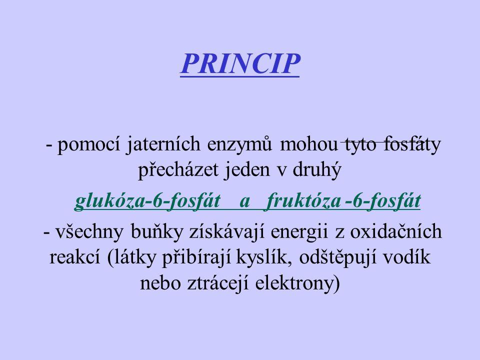 PRINCIP - pomocí jaterních enzymů mohou tyto fosfáty přecházet jeden v druhý glukóza-6-fosfát a fruktóza -6-fosfát - všechny buňky získávají energii z