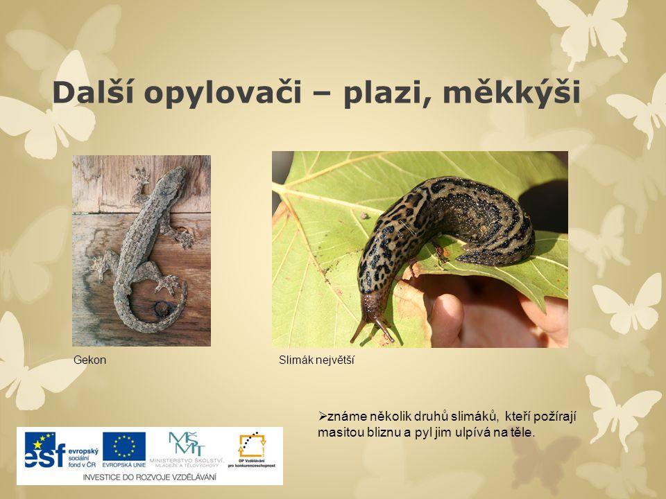 Další opylovači – plazi, měkkýši GekonSlimák největší  známe několik druhů slimáků, kteří požírají masitou bliznu a pyl jim ulpívá na těle.