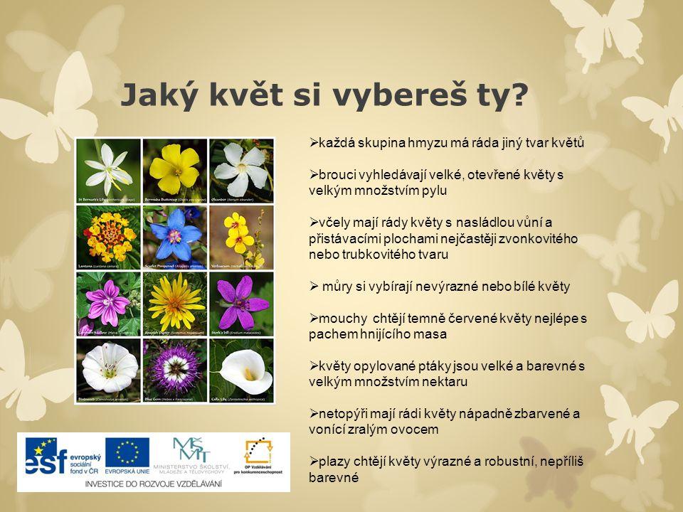 Jaký květ si vybereš ty? ].].  každá skupina hmyzu má ráda jiný tvar květů  brouci vyhledávají velké, otevřené květy s velkým množstvím pylu  včely