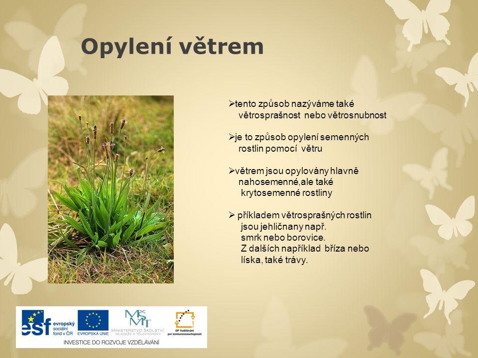 Zajímavosti Drakovec obecný, rostlina, která přítápí svým opylovačům Liány  v chladných oblastech je zvláštním lákadlem pro opylovače teplo uvnitř květu  např.