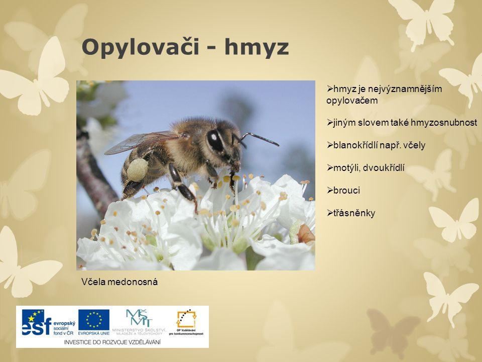 Opylovači - hmyz  hmyz je nejvýznamnějším opylovačem  jiným slovem také hmyzosnubnost  blanokřídlí např. včely  motýli, dvoukřídlí  brouci  třás