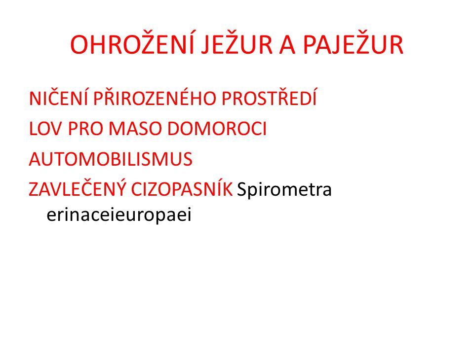 OHROŽENÍ JEŽUR A PAJEŽUR NIČENÍ PŘIROZENÉHO PROSTŘEDÍ LOV PRO MASO DOMOROCI AUTOMOBILISMUS ZAVLEČENÝ CIZOPASNÍK Spirometra erinaceieuropaei