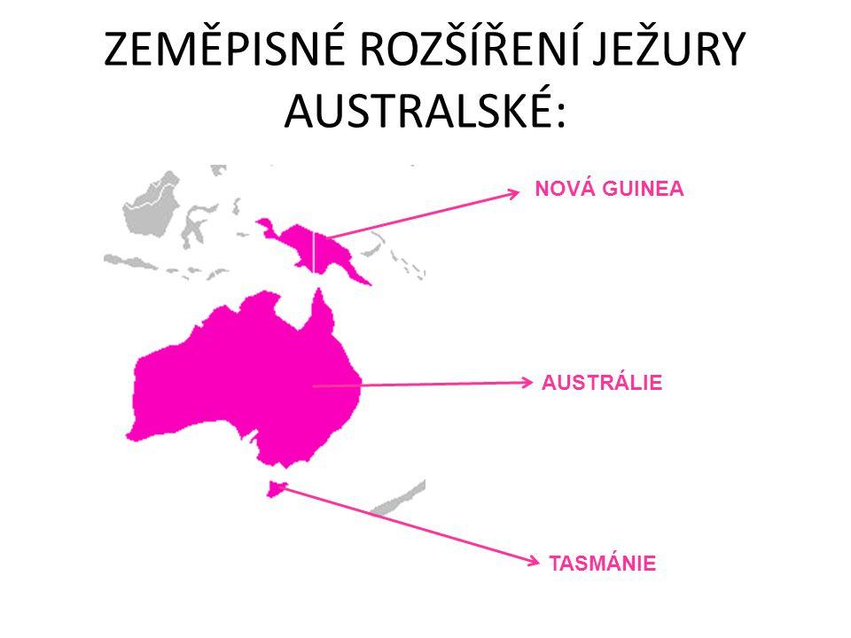 ZEMĚPISNÉ ROZŠÍŘENÍ JEŽURY AUSTRALSKÉ: NOVÁ GUINEA AUSTRÁLIE TASMÁNIE