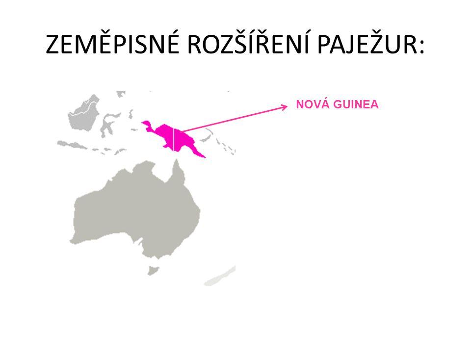 ZEMĚPISNÉ ROZŠÍŘENÍ PAJEŽUR: NOVÁ GUINEA