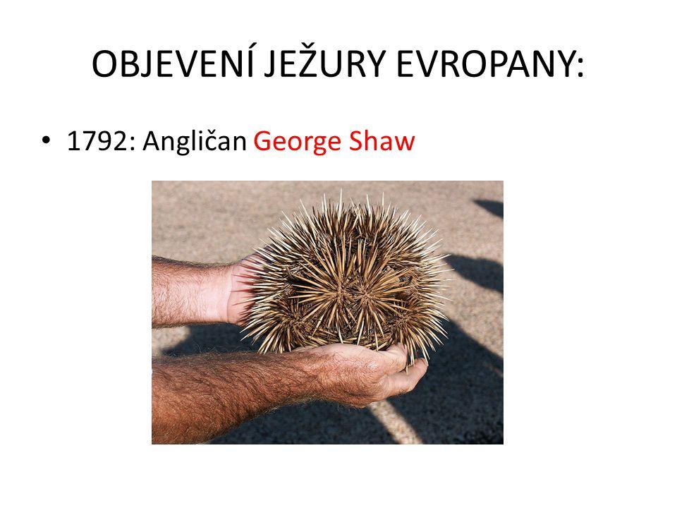 OBJEVENÍ JEŽURY EVROPANY: 1792: Angličan George Shaw